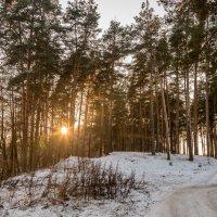 Закат солнца в лесу :: Юрий Бичеров