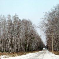 Эх дороги , только снежная пыль летит... :: Мила Бовкун