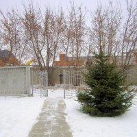 Приходите , скоро Новый год ! :: Мила Бовкун
