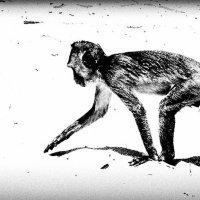 Monkey. :: Илья В.