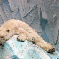 Послеобеденный сон или шкура медвежья... :: И.В.К. ))