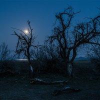 Тихо светит луна... :: Альберт Беляев