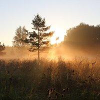 Утро августа :: Мария Кухта