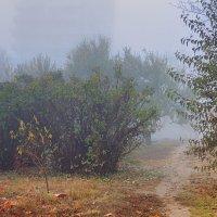 туман :: sagris S...