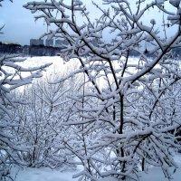 Пушистая зима :: Елена Семигина