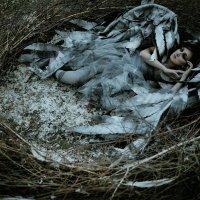 """проект """"ПТИЦА"""" :: Alexey Kudinoff"""