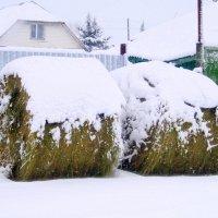 Стожки под снегом . :: Мила Бовкун