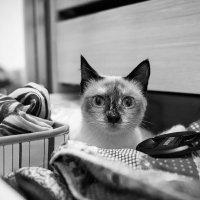 Хорошо, когда в шкафу все на своих местах... :: Татьяна Котик