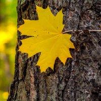 Осенняя палитра :: Мария Богуславская