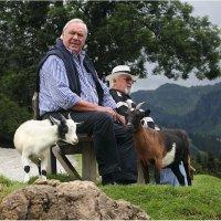Посиделки с козами :: Виктория Иванова