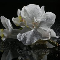 Просто цветочек.... :: Sergey Apinis
