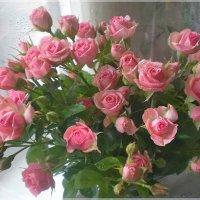 Розовый салют :: Эля Юрасова
