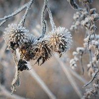 Зимние украшения :: Николай Белавин