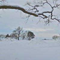 белым снегом замело :: Елена