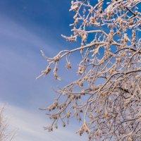 Морозное утро :: Oxana Kilina