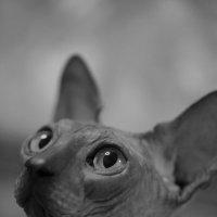 Мой кот Fabien! :: Irina Fabien