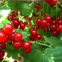 Сочные витамины :: Стас Борискин (Stanisbor)