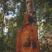 В лесу... :: Павел Зюзин