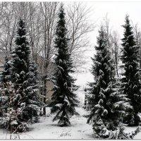В Финском парке. Первый снег. :: Fededuard Винтанюк