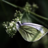 Бабочка. :: Валерия  Полещикова