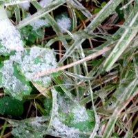 Первый снег... :: Тамара (st.tamara)