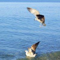 Воооот такую рыбу поймал! :: Светлана Винокурова