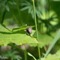 Лесной житель :: Мария Букина