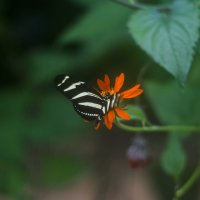 Бабочка :: Иван Птушкин