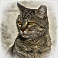 Портрет Ален Делона -из серии Кошки очарование мое! :: Shmual Hava Retro