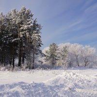 Зима началась :: Наталия Григорьева