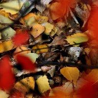 Осенний  ковер... :: Валерия  Полещикова
