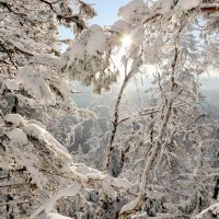 Снежность :: Мария Кухта