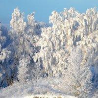Сибирская зима. :: nadyasilyuk Вознюк
