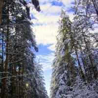 Лесной коридор. :: Мила Бовкун