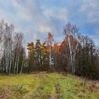 Улетели  листья  золотые. :: Валера39 Василевский.