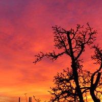 вечернее небо из окошка :: Ольга Богачёва