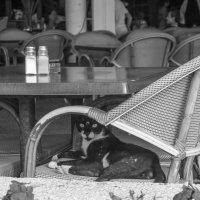 Посетитель кафе у моря :: Татьяна Огаркова