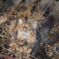 Кошка :: Алена Смирнова