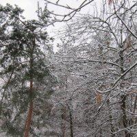 Деревья зимой :: Дмитрий Никитин