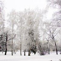 Моя сибирь :: раиса Орловская