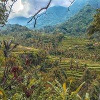 Радужный Бали :: Александр