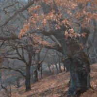 Сказочный лес ... :: Vadim77755 Коркин