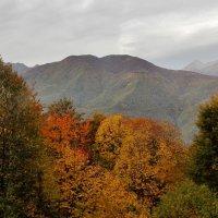 Осень... :: СветЛана D