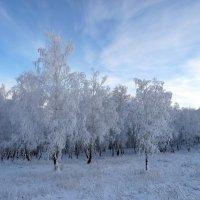 Голубой лес. :: nadyasilyuk Вознюк