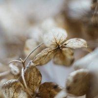 Winter flowers :: Katie Voskresenskaia