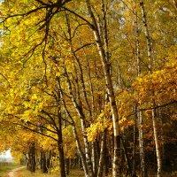Воспоминания о светлом прошлом :: Андрей Лукьянов