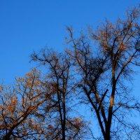 Осень :: Валерия  Полещикова
