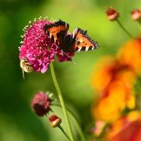 Трудяжки: пчелка и бабочка :: Евгения Балаганская