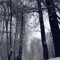 парк на речном :: Владимир Гулевич