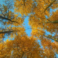 Осень :: Александр Носов